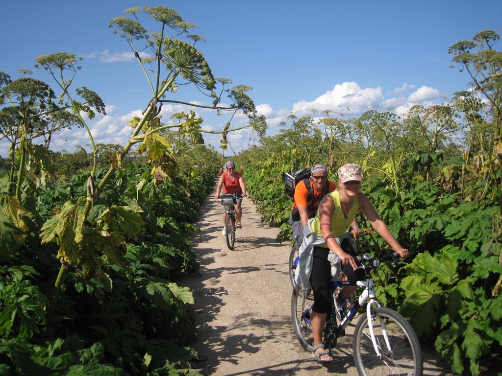 100 km biking around Lubans lake through giant hogweed – MOVIE