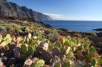 Canary Islands: Volcano Teide and La Gomera