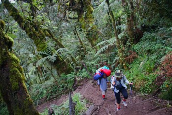 3rd-4th day: Moshi – Machame Gate – rain foresti – Machame Camp 3000 – Shiras plateau – Shira Camp 3840