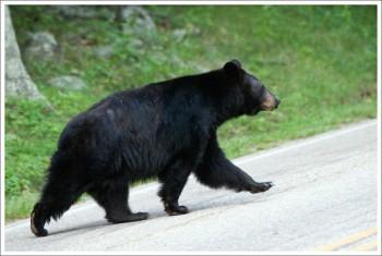 Appalachian Trail: Shenandoah NP, U.S.