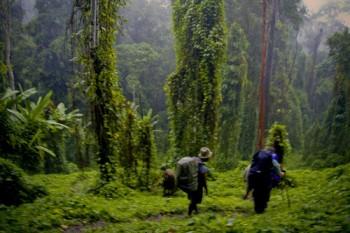 Kokoda Track, Owen Stanley range, New Guinea